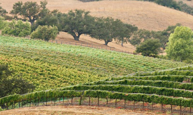 Madera California Wine Trail Winery Tours Alltrips