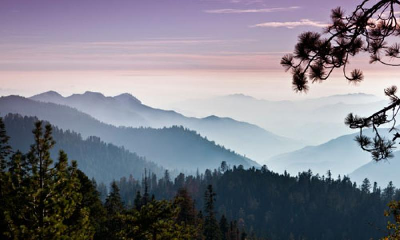 Mist over the Stanislaus National Forest