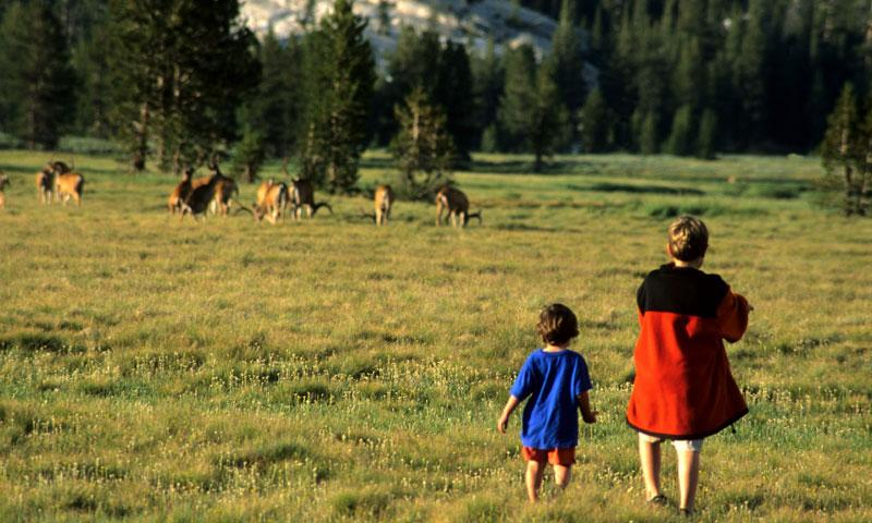 Kids watching Mule Deer in Yosemite