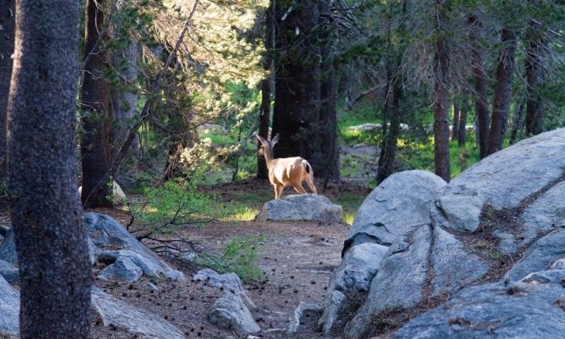 Bridalveil Creek Campground Yosemite Camping Alltrips