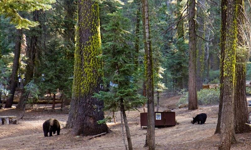 Crane flat campground yosemite camping alltrips for Yosemite park camping cabins