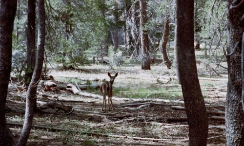 Yosemite Creek Trail Yosemite Creek