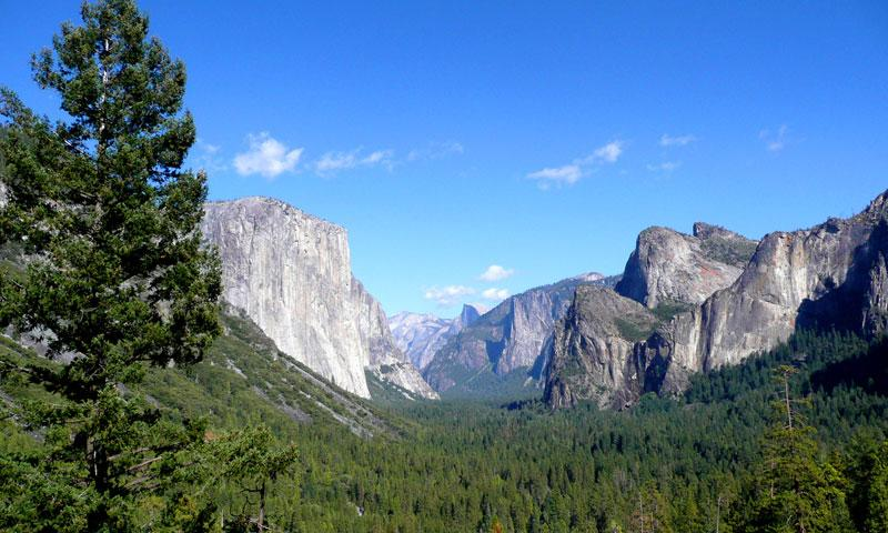 Looking towards El Capitan in Yosemite National Park